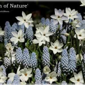 Breath of Nature - pakket-